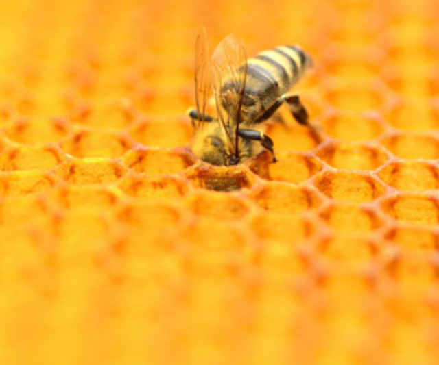 Ukraine ranks first in Europe for honey production – FAO