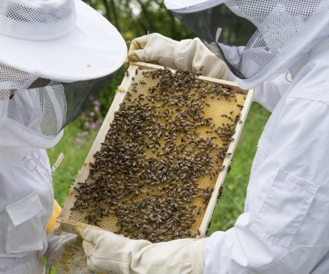 Beekeeping looms large in Ukrainian society: one in nine Ukrainians keep hives